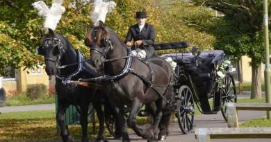 Wedding Horse & Cart