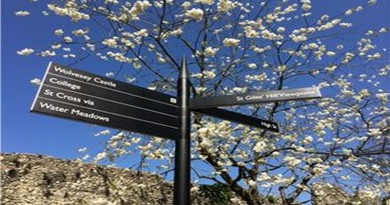 Sign-and-blossom-Weirs-Walk-Winchester