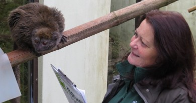 marwell-alaotran-gentle-lemur