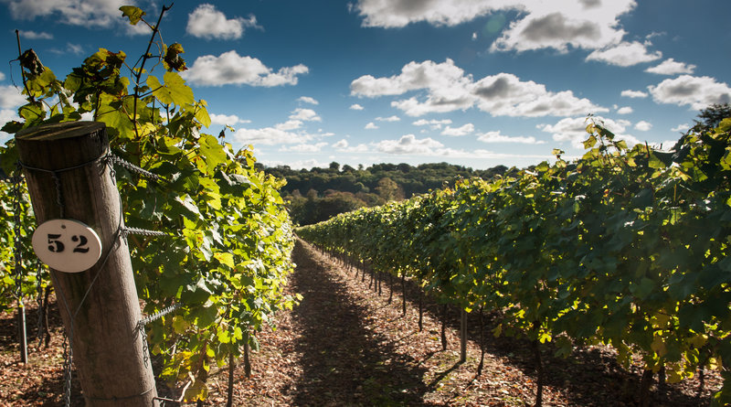Hambledon Vineyard