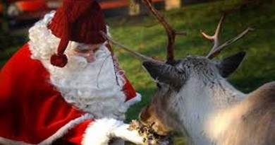 The Christmas Country Show with Festive Market and Pet Show