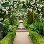 Rose arches in June at Mottisfont, Hampshire