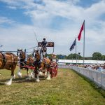 New Forest and Hampshire County Show