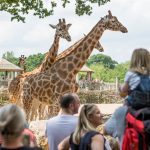 Marwell Zoo_Giraffe and guests