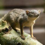 Credit Marwell Zoo - NEW SPECIES - BokiBoky 1