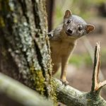 Credit Marwell Zoo - NEW SPECIES - BokiBoky 2