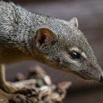 Credit Marwell Zoo - NEW SPECIES - BokiBoky 3