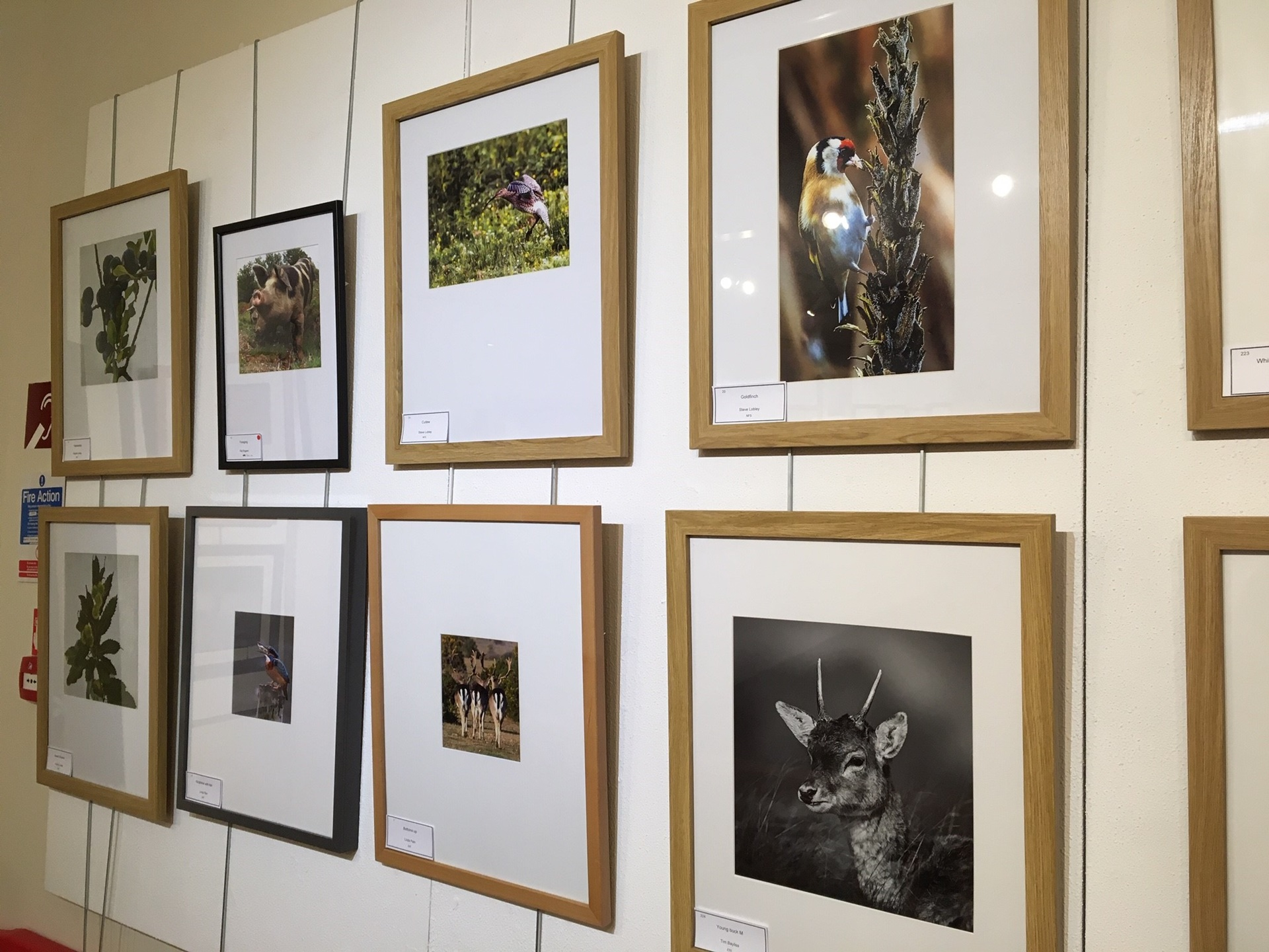 New Forest Camera Club Exhibition