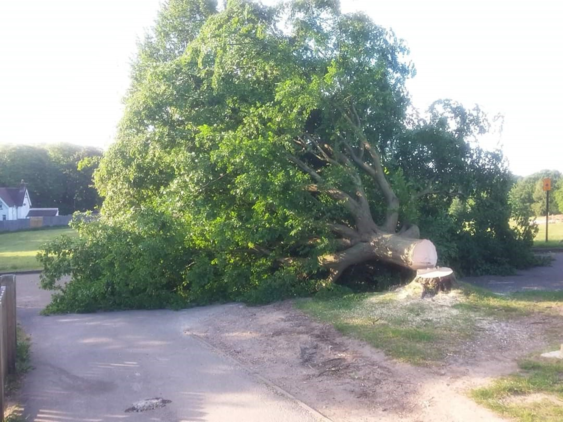 Tree felled at cemetery