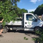 Zookeepers collect vandalised tree