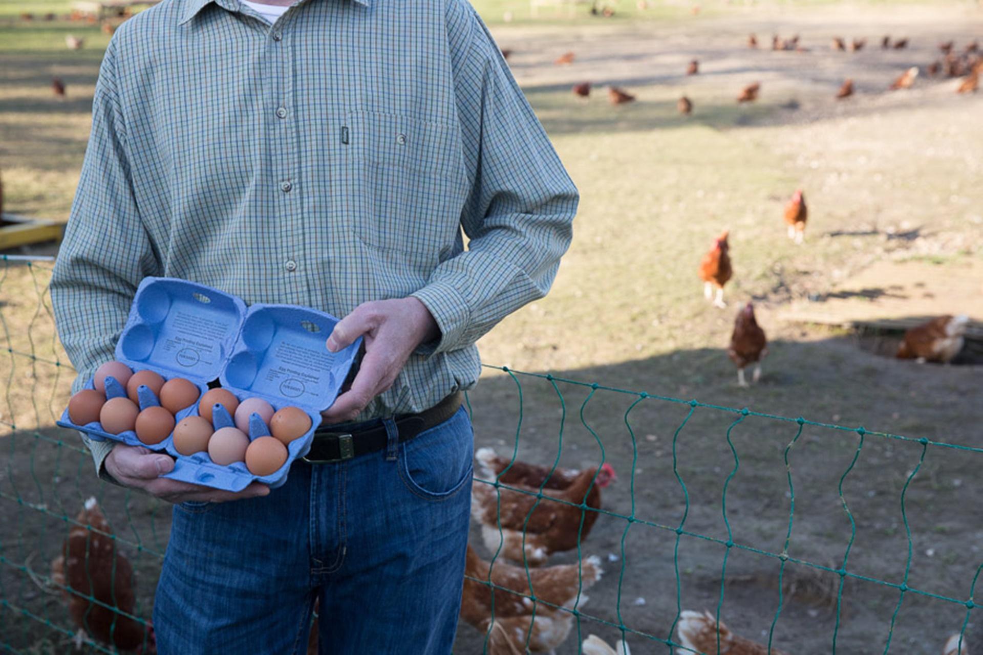 Clayton Eggs Hampshire
