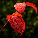 Bronze - Autumn Leaves 2
