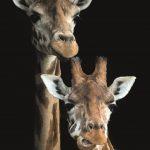 Zoo Photographer - Credit Jason Brown - 2Giraffes CMYK