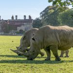 Zoo Photographer - Credit Jason Brown - Rhino in front of Hall