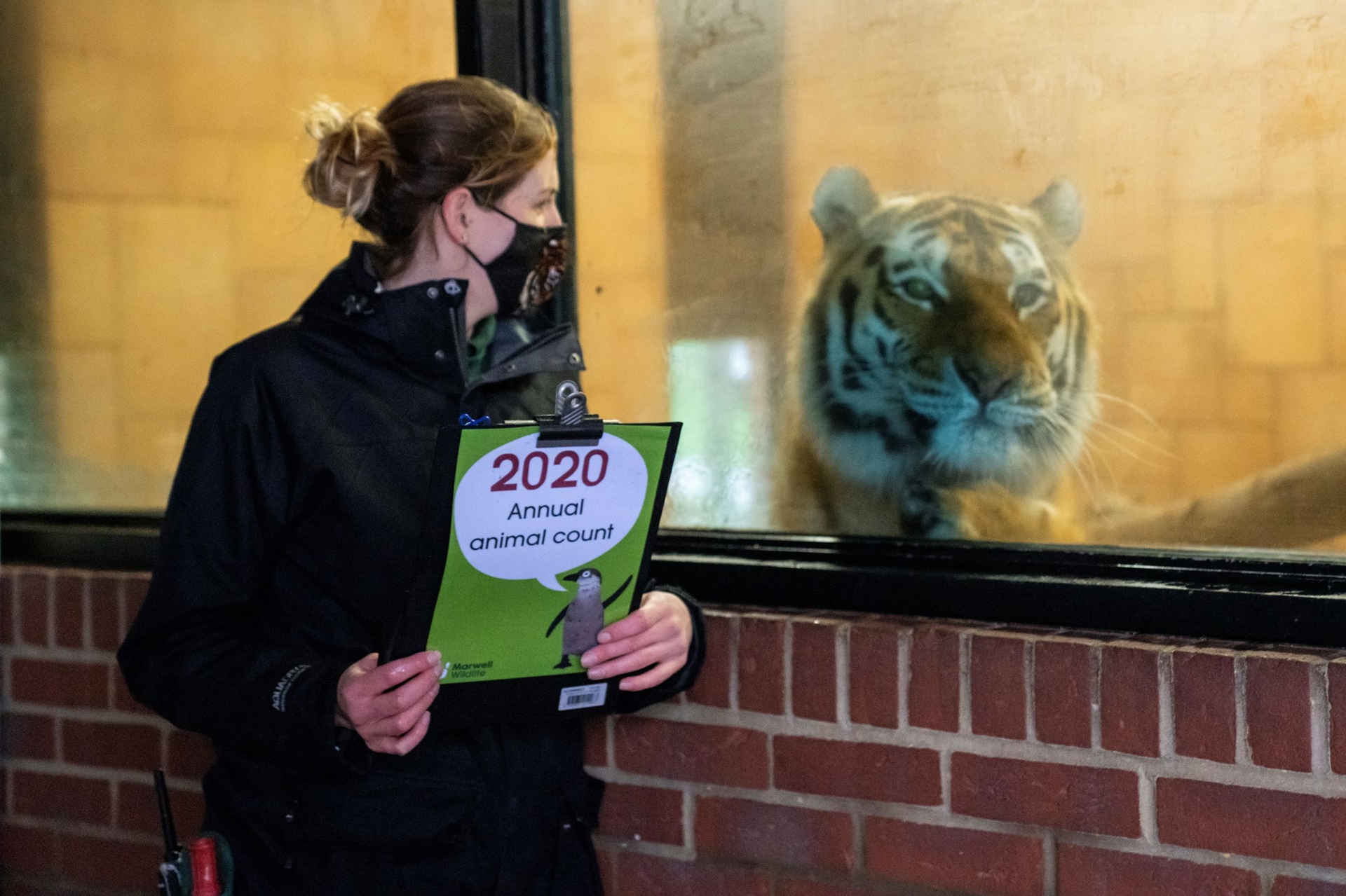 Team leader Carrie Arnold with Amur tiger