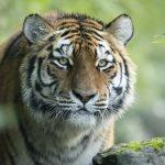 Copyright: Marwell Wildlife,Jason Brown